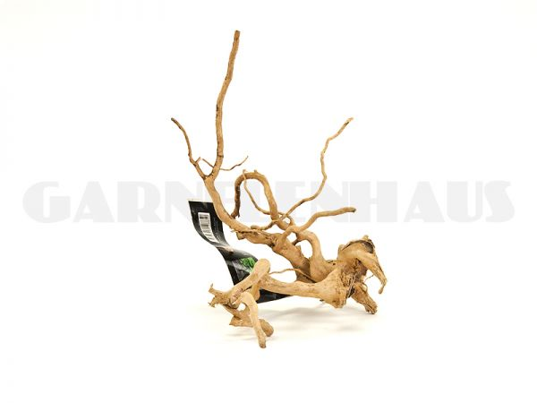 Spiderwood S, ca. 15-25 cm
