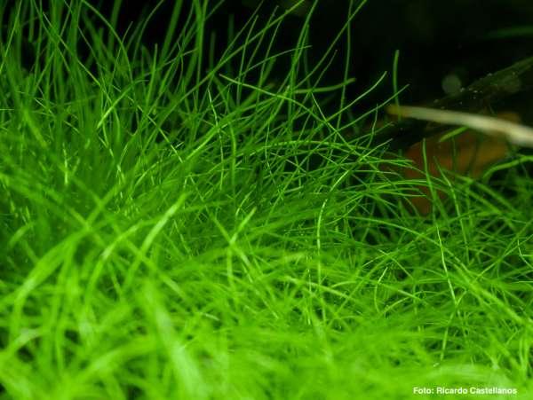 Zickige Aquarienpflanzen - Probleme in der Umstellung