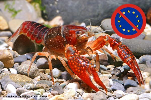 Die EU-Verbotsliste