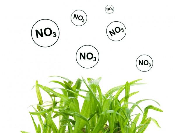 Nitrat als Pflanzennährstoff