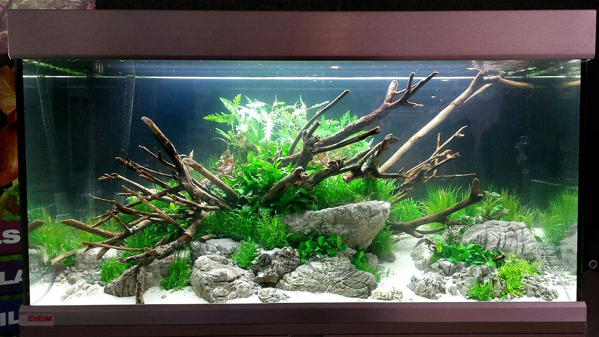 The Art Of The Planted Aquarium Wiki