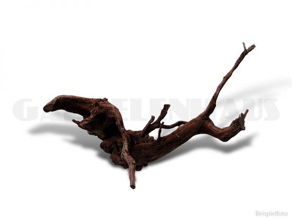 Echte Moorkienwurzel Gr. 2, ca. 25-35 cm