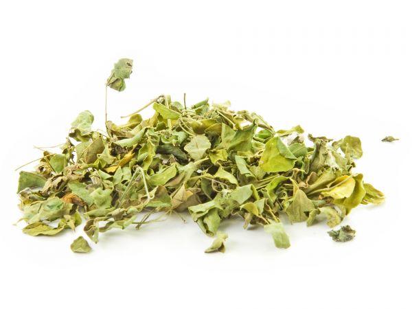 Moringa Oleifera Laub und Blätter, grün, getrocknet