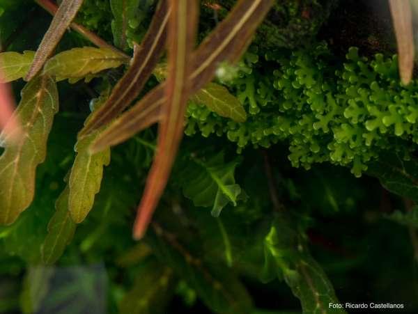 Pflanzen im Aquarium pflegen