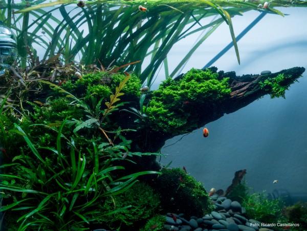 Aquarienpflanzen richtig düngen