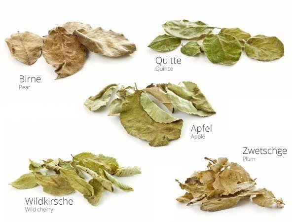 Obstbaummix Obstbaumblätter im Garnelen-Aquarium - Apfel, Birne, Zwetschge, Quitte, Wildkirsche
