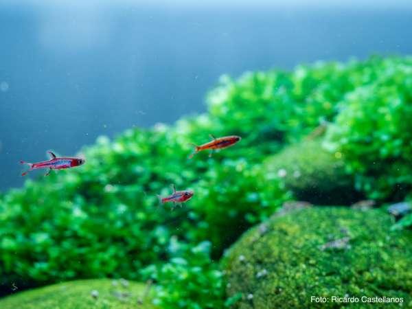 Filterung im Fischaquarium vs. Filterung im Pflanzenaquarium