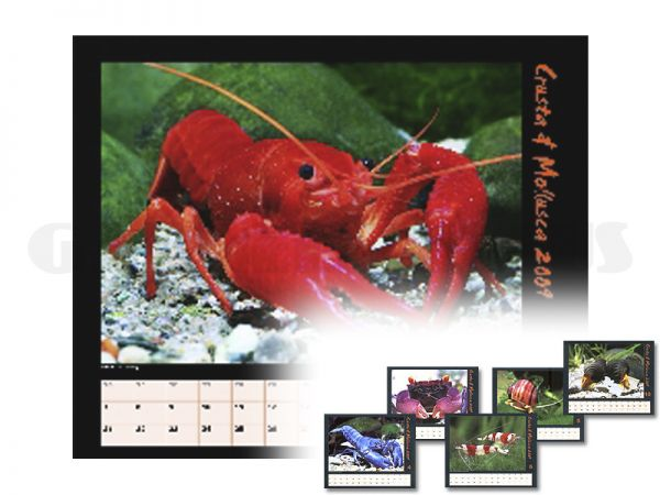 Crusta & Mollusca 2009 - Kalender