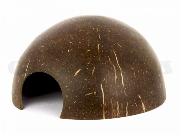 Kokosnuss-Krebshaus, glatte Oberfläche