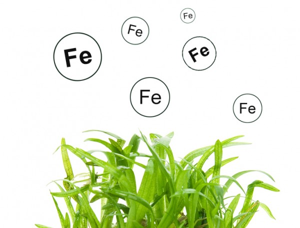 Eisen als Pflanzennährstoff