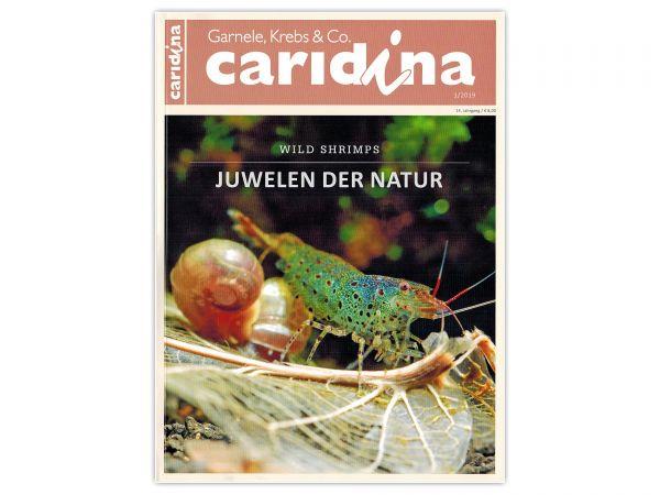 caridina - Garnelen, Krebse & Co :: Wirbellosen-Magazin, Dähne-Verlag, Ausgabe 1/2019