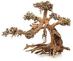 Was ist Aquascaping - Wurzelholz / Drachenbaum