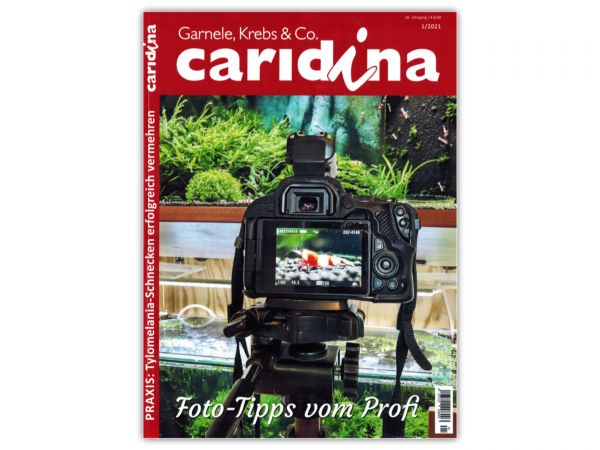 caridina - Garnelen, Krebse & Co :: Wirbellosen-Magazin, Dähne-Verlag, Ausgabe 1/2021