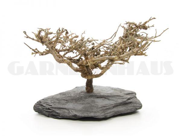 Nano-Baum Bonsai S